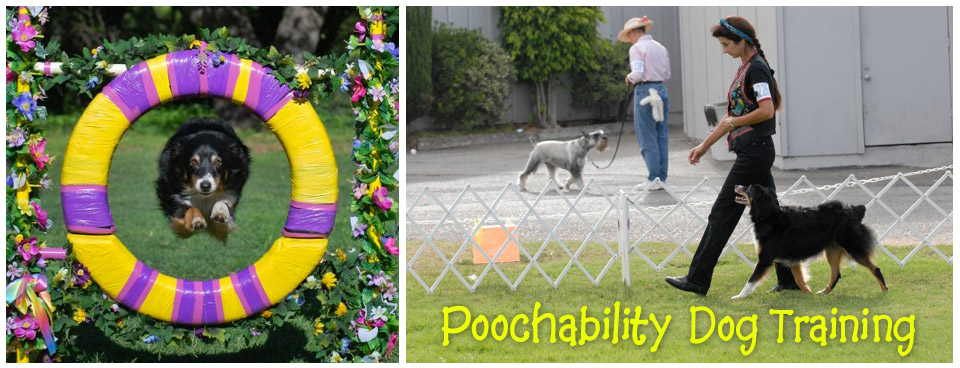 Poochability Dog Training, Classes, Products & More