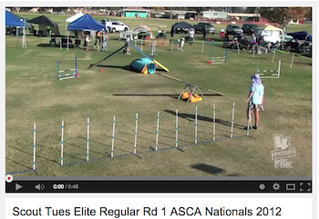 Scout – 1st Elite Regular Class of ASCA Finals Veterans